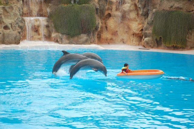 Delfines danzando (Tenerife)