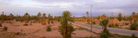 Despertar en el desierto