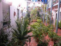 patios de Malaga