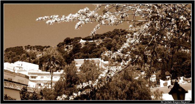 Primavera en Mijas