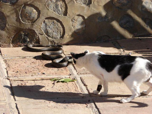 El gato y la serpiente