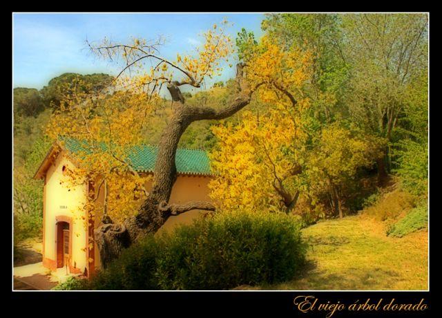 El viejo árbol dorado