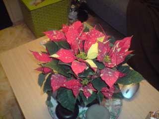 flores navide�as