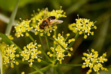 A bee (ja)