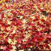 El otoño y las hojas