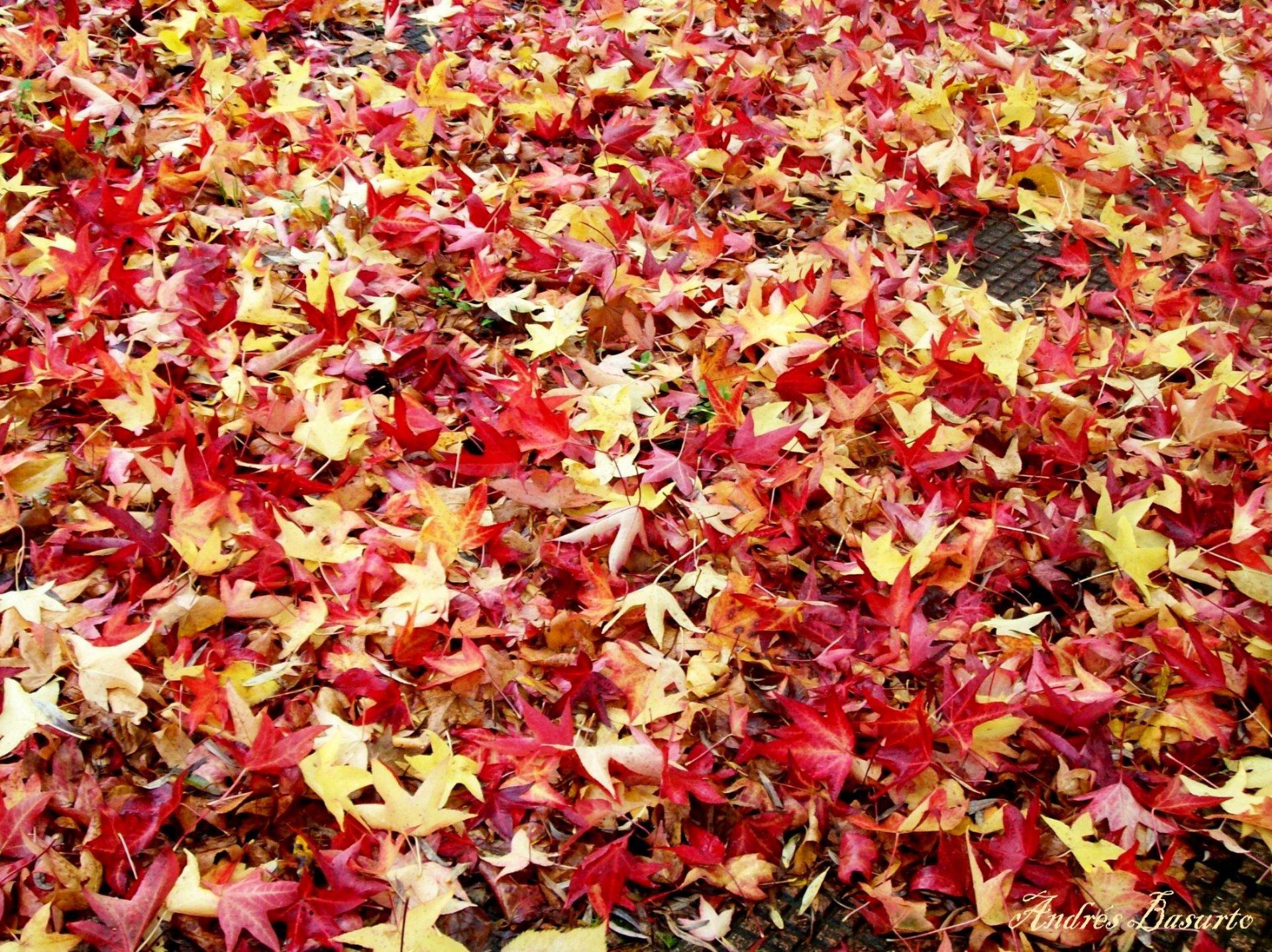 El oto o y las hojas fotos de naturaleza - Fotos bonitas de otono ...