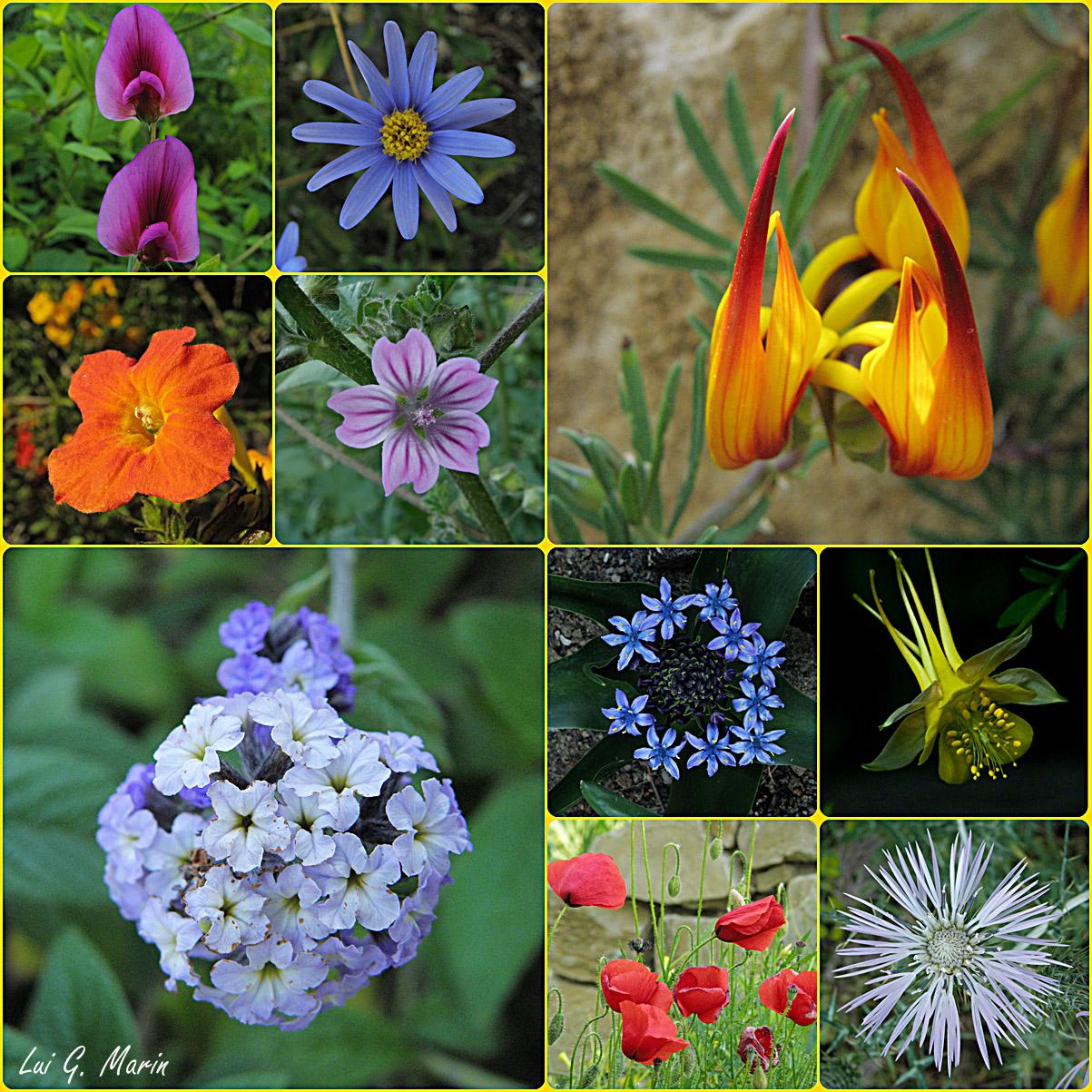 Flores del jard n bot nico fotos de creaci n y fotomontajes - Plantas de jardin fotos ...
