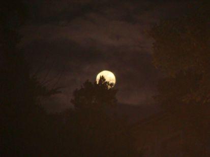 Luna de juve