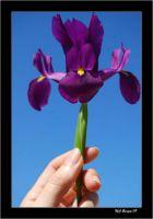 -Perfección en una Flor-