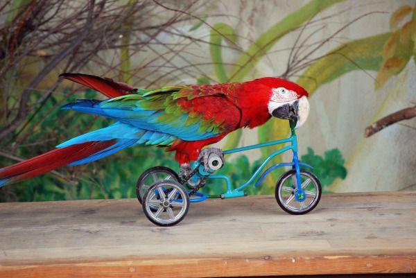 Montando en la bici - 3 part 10