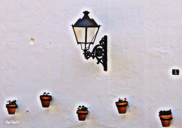 Flores,luz y cal