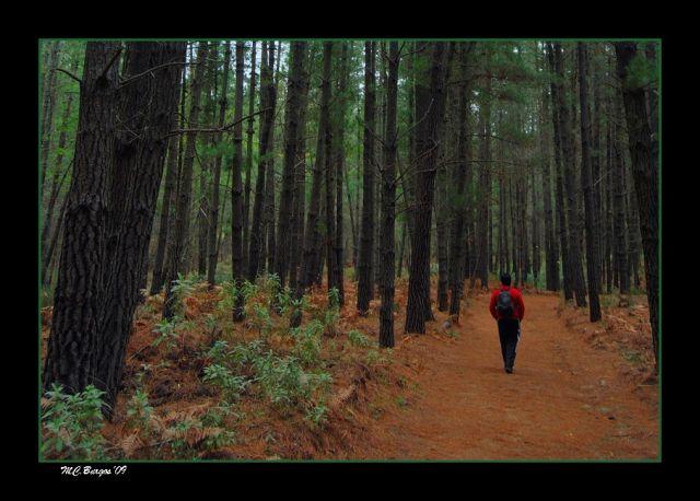 MUSICA natural del viento entre los árboles