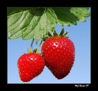 Fresas y Cielo