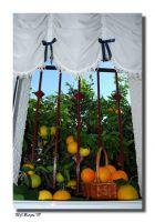 El Naranjo desde la ventana