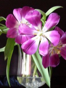 Copa de tulipanes