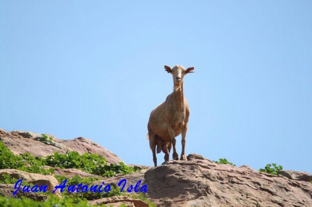 Animal autóctono en la altura