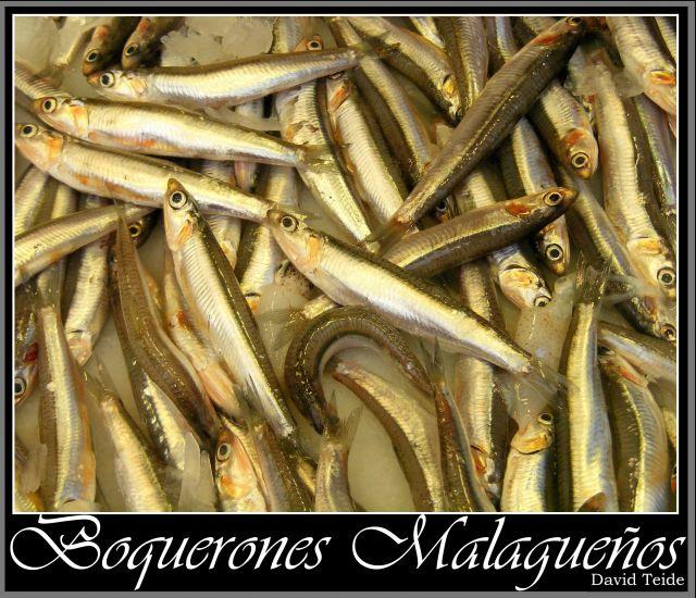 http://fotos.diariosur.es/201005/boquerones-640x640x80.jpg
