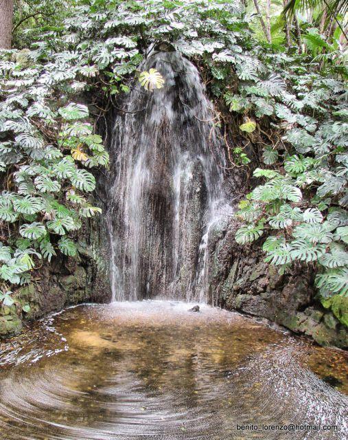 Jard n botanico la concepci n fotos de naturaleza for Jardin botanico la concepcion