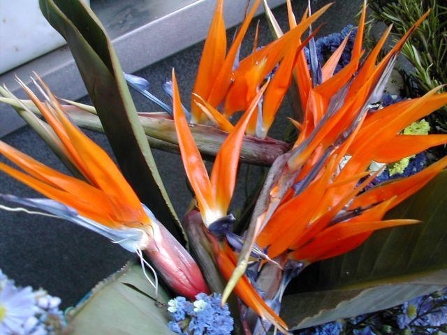 Tenerife: Flores y plantas