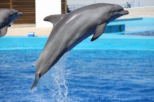 Saltan y saltan | fotos de Animales