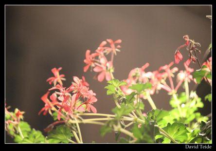 Las flores de las Farolas.