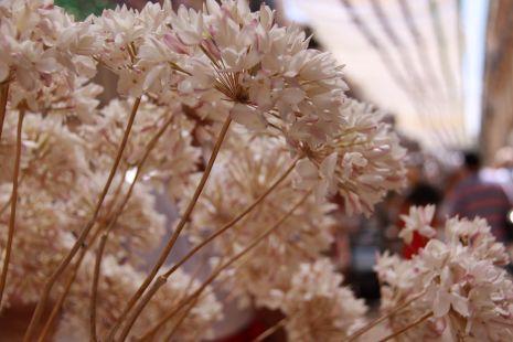 La flor de Malaga