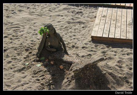 Una sirena en la arena
