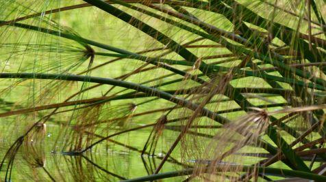 vegetacion acuatica