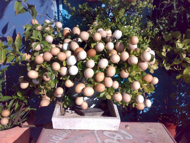 Planta huevos