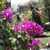 Flores de la Alcazaba