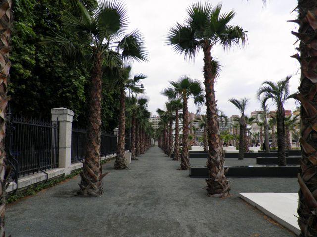 El Palmera de las Sorpresas (Puerto de Málaga)