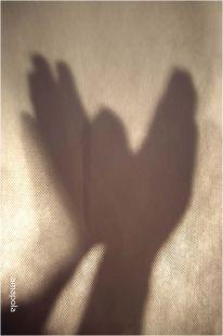 palomas en sombras