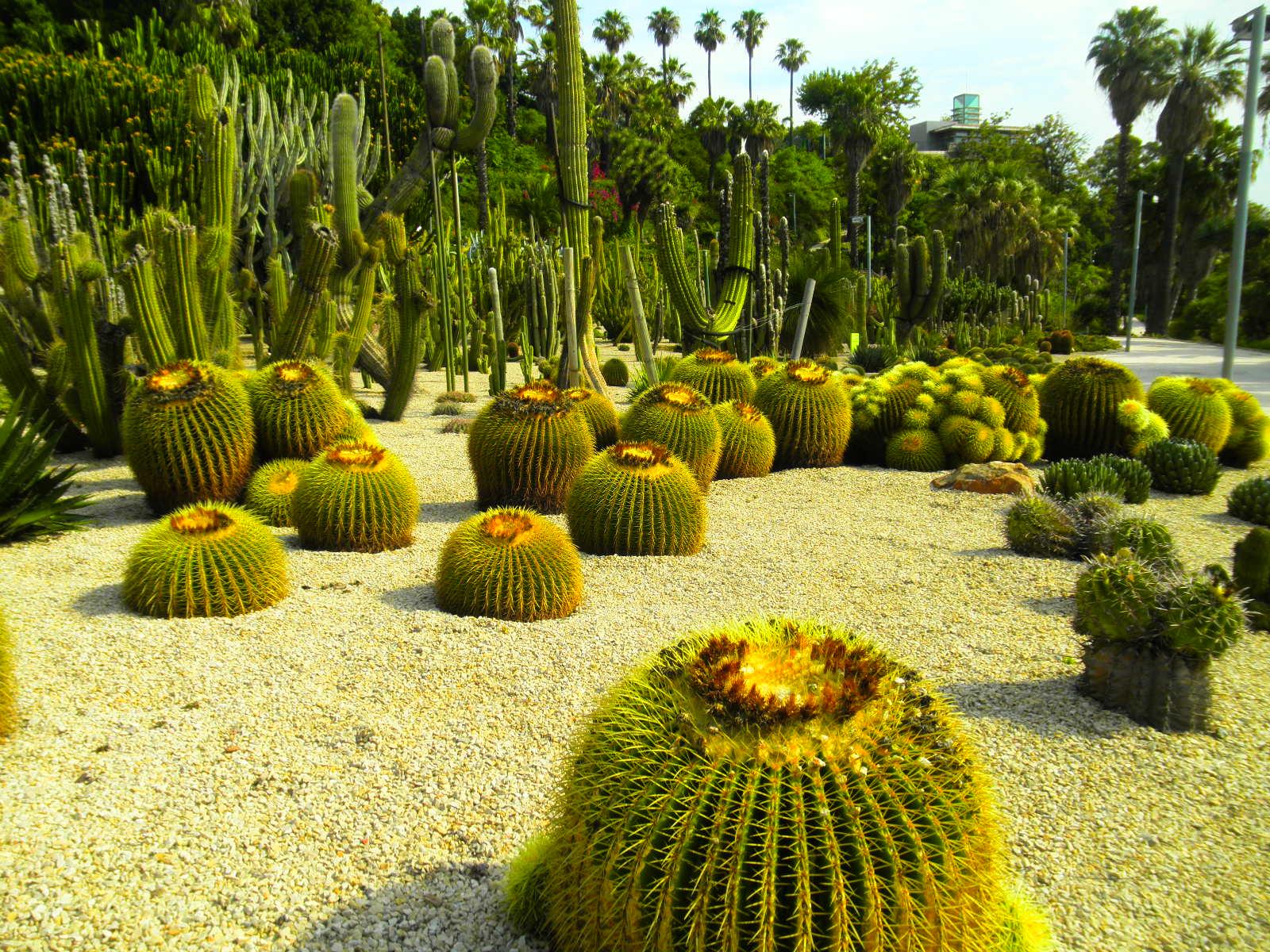 Jardines de cactus fotos de naturaleza for Jardines con cactus