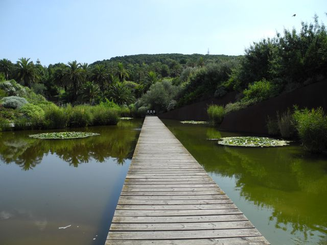 Jard n bot nico de barcelona fotos de naturaleza for Barcelona jardin botanico