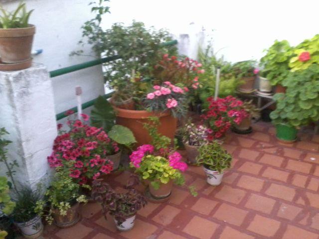 Patio andaluz fotos de naturaleza - Fotos patio andaluz ...