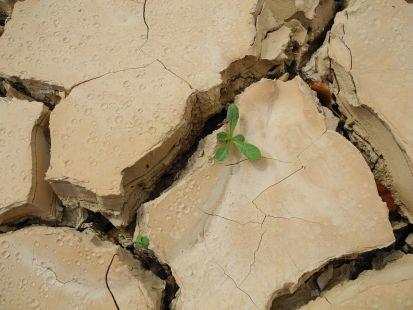 Sobreviviendo a la sequía