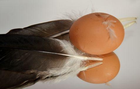 El huevo de la pasi�n