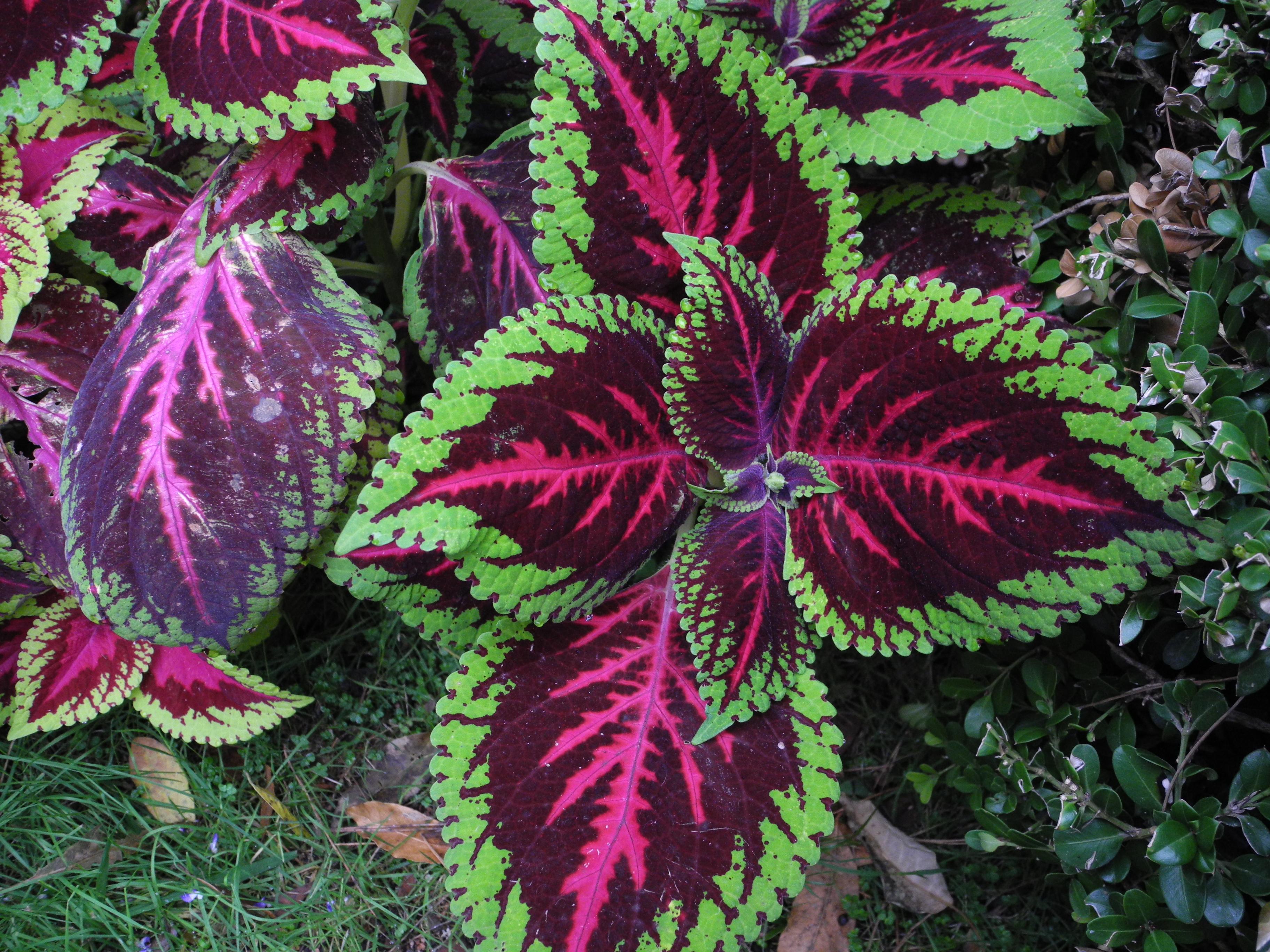 plantas de jard n fotos de naturaleza