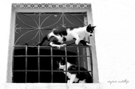 Cada uno vigila una calle
