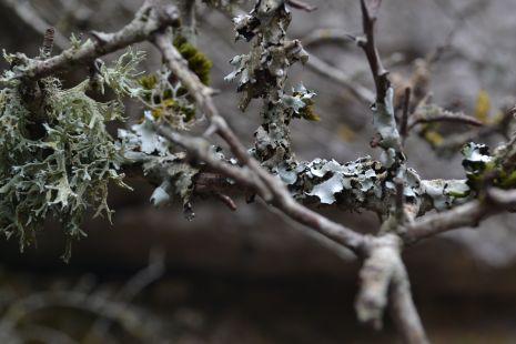 Invierno en el torcal de antequera