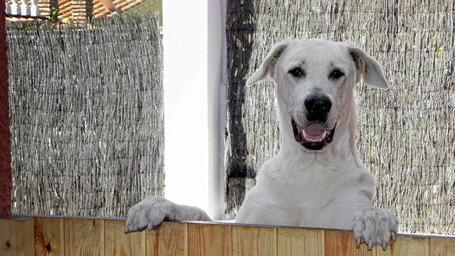 Un cachorro gigante....