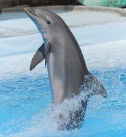 Feliz Delfín