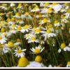 primaveral