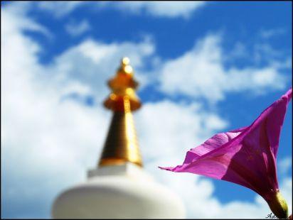 Flor y Stupa