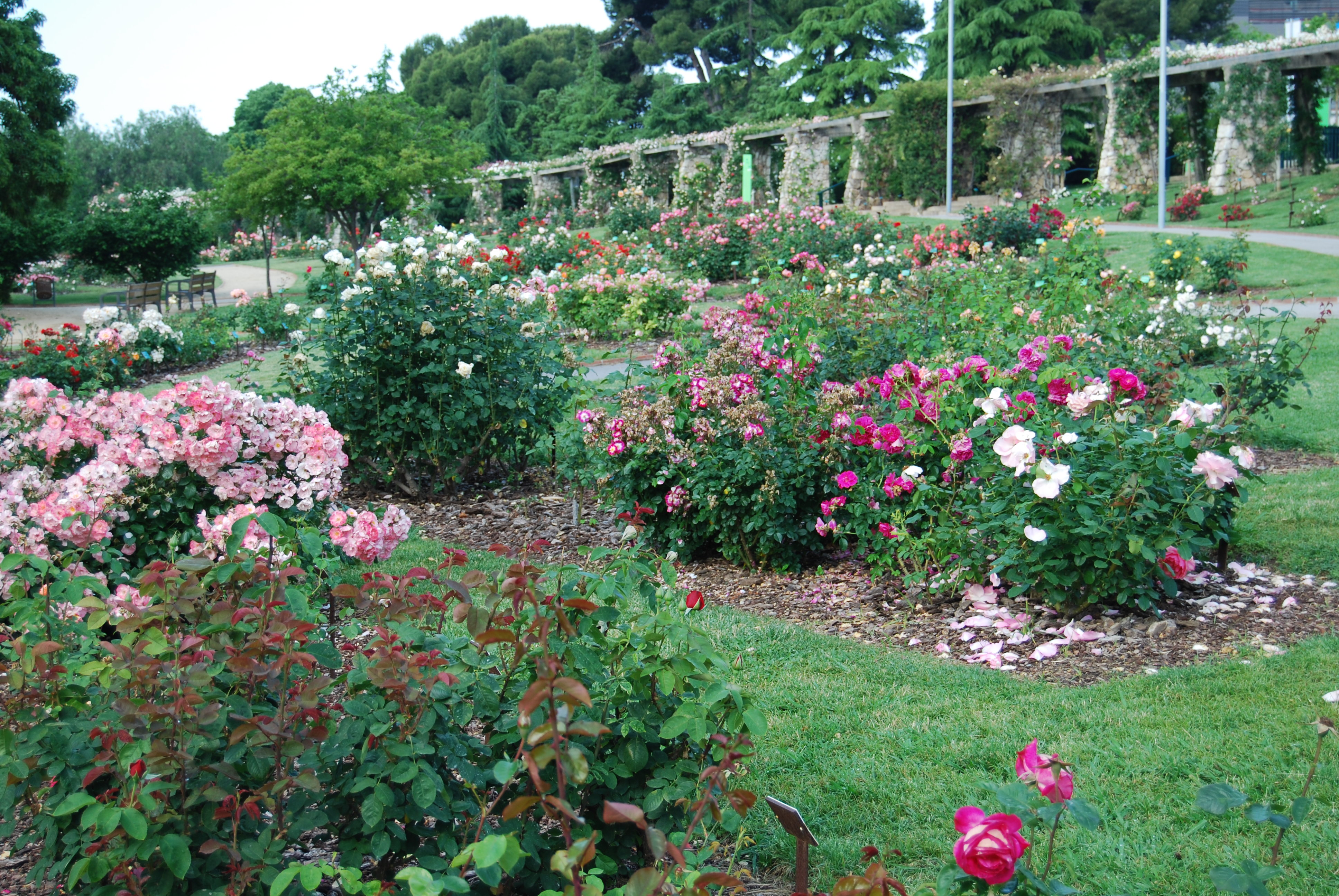 Jardines de cervantes en barcelona fotos de naturaleza - Jardines de barcelona ...