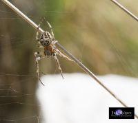 En la tela de una araña