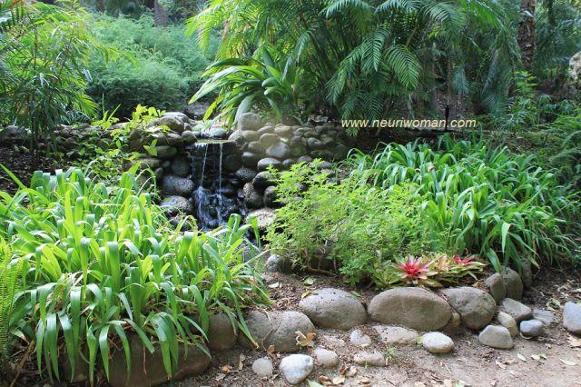 Jard n bot nico de m laga fotos de cultura for Jardin botanico de malaga