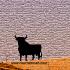 Toro de Casabermeja.