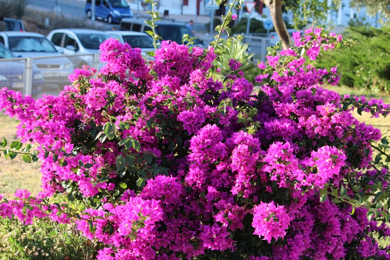 Flores de jardin fotos de naturaleza - Fotos de flores de jardin ...