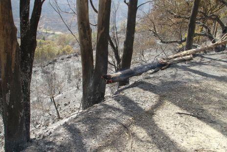 Incendio Sierra de Mijas